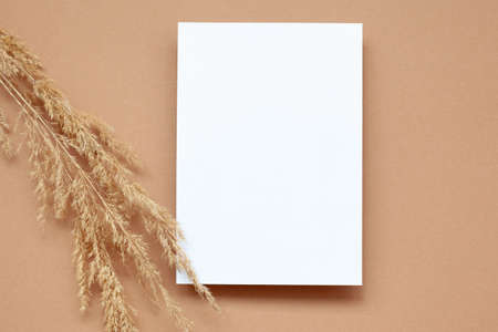 Mockup with empty blank paper and dried pampas grass over pastel beige background. Minimal, stylish, monochrome concept. Flat lay, top view.