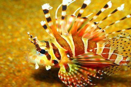 aquarium visit: Aquarium fish