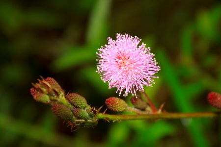 Hairy flower photo