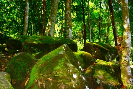 Rock covered by algae in virgin forest at Kionsom Waterfall photo
