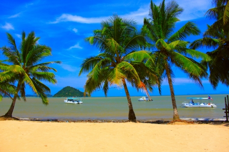 famous places: Coconut tree in sandy beach with blue background and boat to island at Lokawi Beach, Putatan, Sabah