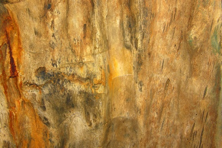 knothole: Texture of wood fossil Stock Photo