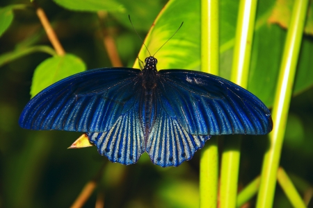 Borneo butterfly species Stock Photo - 9171424