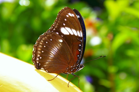 Close up butterfly photo