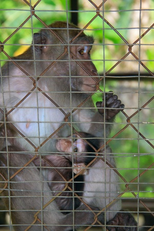Monkey and child in cage photo