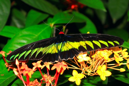 Beautiful and colorful butterfly species at Butterfly Park, Kuala Lumpur, Malaysia Stock Photo