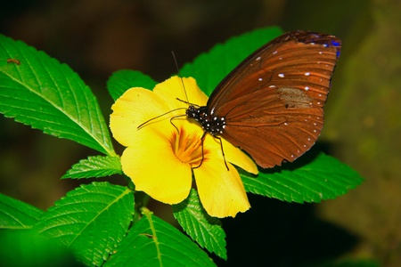 Beautiful and colorful butterfly species at Butterfly Park, Kuala Lumpur, Malaysia photo