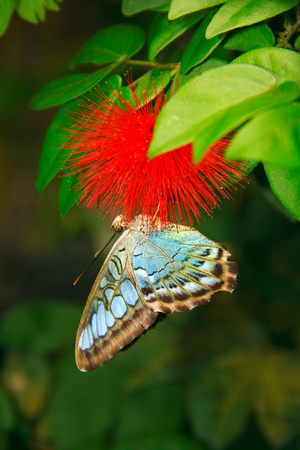 Beautiful and colorful butterfly species at Penang Butterfly Park, Pulau Pinang, Malaysia