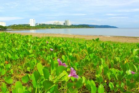 likas: Landscape of Likas Bay, Kota Kinabalu, Sabah, Malaysia