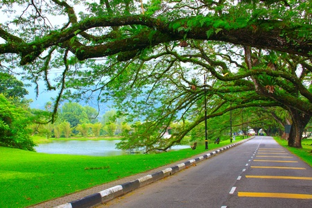 Panoramic view of public lake garden at Taiping, Perak, Malaysia Stock Photo - 11239052