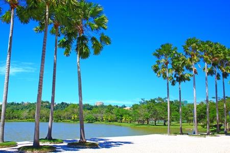 Panoramic view of public lake garden at Likas, Sabah, Malaysia photo