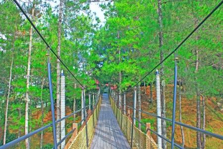 Landscape view of public garden at Kundasang Ranau, Sabah, Malaysia Stock Photo - 13368504
