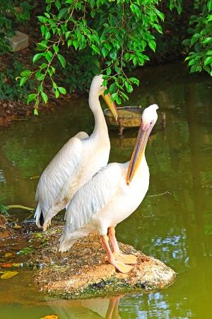Two flamingos on the stone Stock Photo - 13898550
