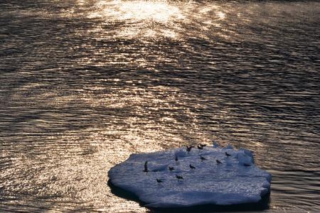 Birds on Iceberg in Alaska