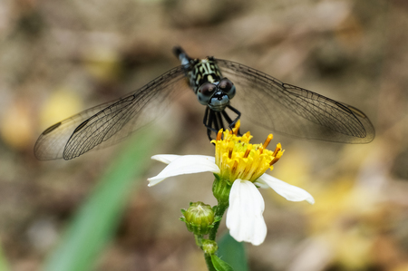 zygoptera: selective focus on dragonfly sitting on flower