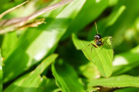 closeup ant on grass