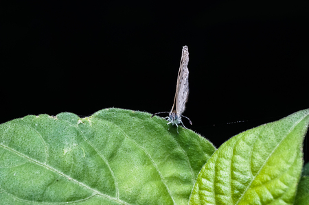 close up of butterfly standing on green leaf