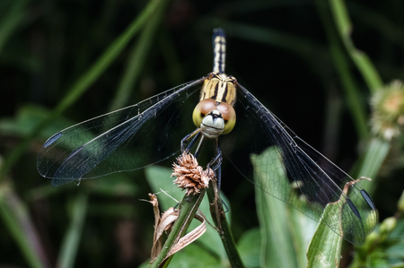 close up shot of dragonfly