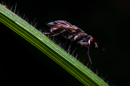 hoverfly on grass Stock Photo
