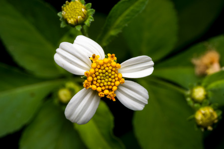 wild flower at the forest