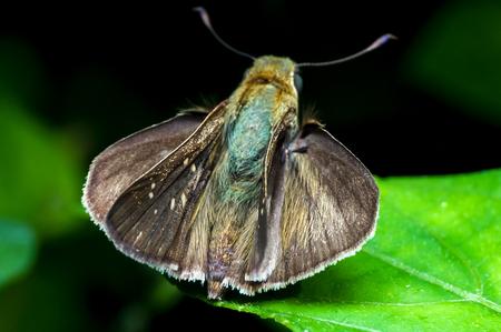Tropical moth on leaf