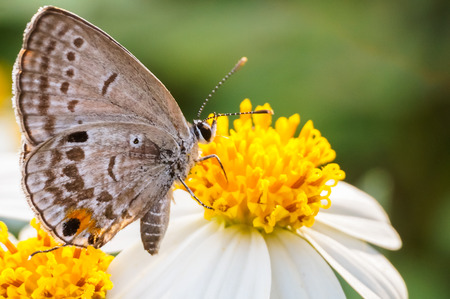 background pattern: butterfly sucking nectar on flower Stock Photo