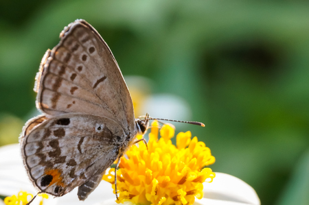 butterfly sucking nectar on flower Stock Photo