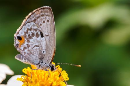 butterfly sucking nectar on flower Stock Photo