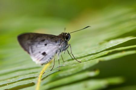 papillon à la ferme
