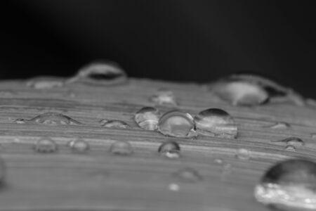 Beautiful water drop on leaf at nature close-up macro Stockfoto