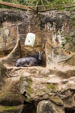 closeup view of deer in zoo malacca, malaysia