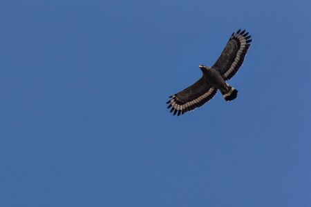 closeup shot of a Serpent Eagle soaring in the blue sky Foto de archivo