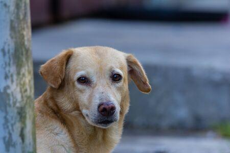 closeup shot of a red abandoned homeless stray dog