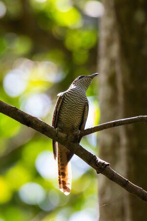 closeup shot of a beautiful bird in nature
