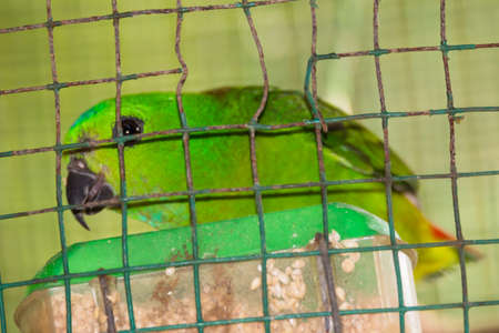 view of a hanging parrot in the cage 스톡 콘텐츠