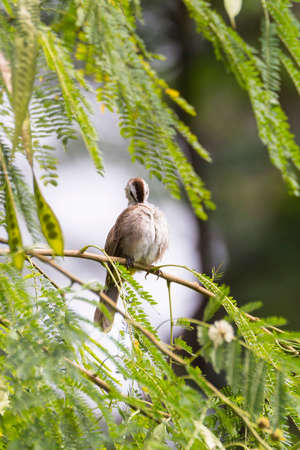 closeup shot of a bulbul bird perched on a twig in nature