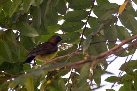 closeup view of beautiful sunbird in nature Stock Photo