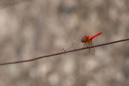 closeup view of a dragonfly in nature Stock Photo