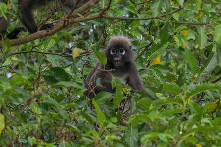 closeup shot of a monkey in nature