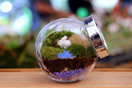 Travel to Bangkok, Thailand. The small terrarium in a glass jar on the market. Stock Photo