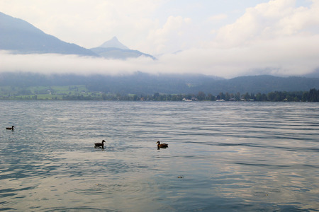 wolfgang: Travel to Sankt-Wolfgang, Austria. The ducks on the lake Wolfgangsee near to mountains in the cloudy weather.