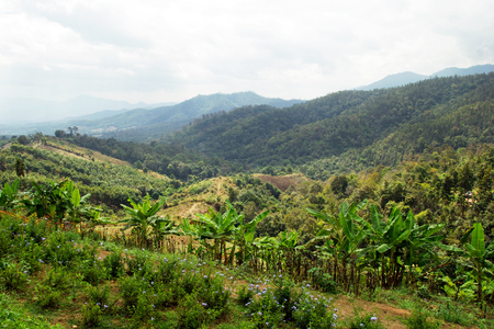 Scenic landscape on the mountains and palm trees. Yun Lai, Pai, Thailand.
