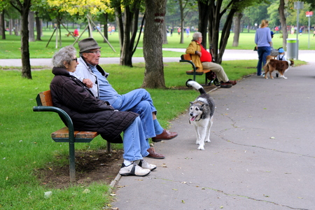 VIENNA, AUSTRIA - AUGUST 31, 2014: View on a park with elderly people sitting on a bench and walking dogs. Editorial