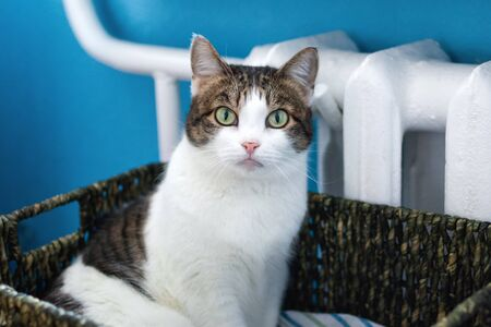 Adorable white tabby cat with green eyes is sitting in cat bed near to heater and looking into the camera.