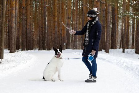 Young woman is training her black and white dog in winter coniferous forest.