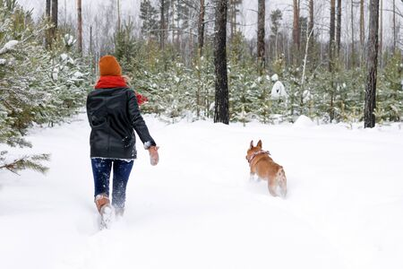 Young woman is playing with her dog on a walk in winter coniferous forest. Back view
