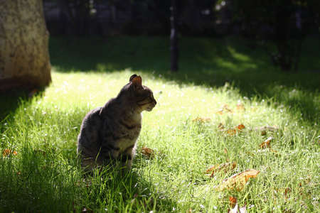 Lonely tabby cat is sitting on a grass on sunny day at summer. Homeless cat on a street. Stockfoto