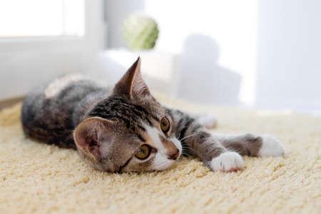 Small white tabby kitten with green eyes is lying on yellow blanket near to window. Standard-Bild
