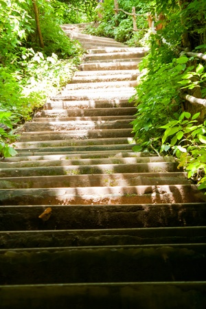stone stairs: steps in the park