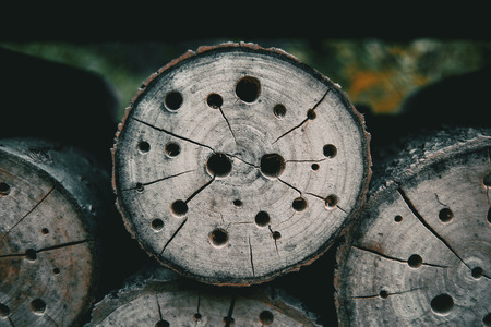 abstract texture with holes in a tree stump Reklamní fotografie